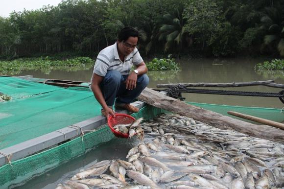 Bình Dương: Làm rõ nguyên nhân cá chết trên hồ Dầu Tiếng
